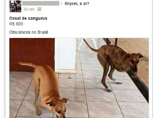 Anúncio falso envolvendo João e Maria. (Foto: Facebook/Reprodução)