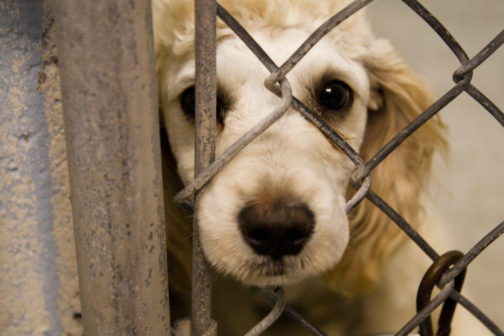 maus-tratos-cachorros