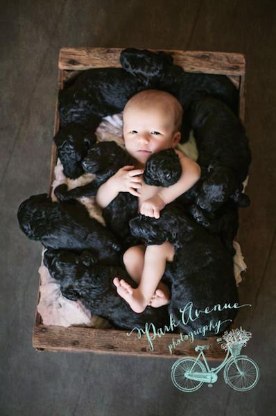 O bebê e os filhotes nasceram no mesmo dia. (Foto: Reprodução / Facebook / Teresa Raczynski / Park Avenue Photography)