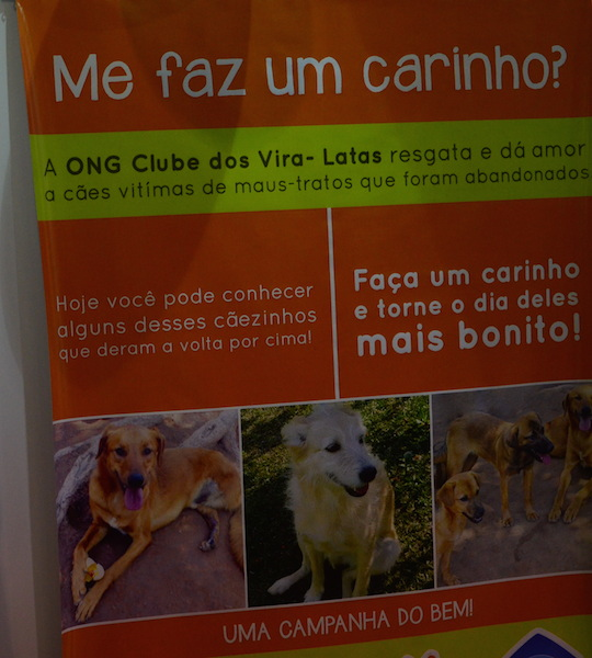 """Campanha """"Me faz um carinho"""" da ONG Clube dos Vira-Latas. (Foto: Fabricio Ladeira)"""