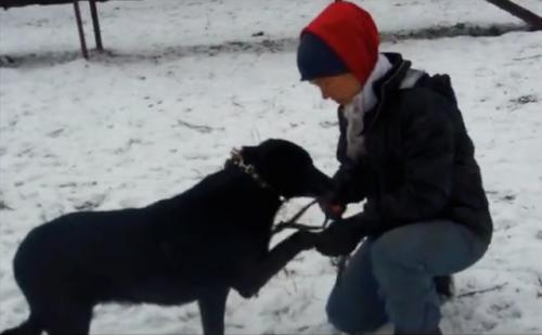 Os cães contam com a ajuda de voluntários. (Foto: Reprodução / Facebook)