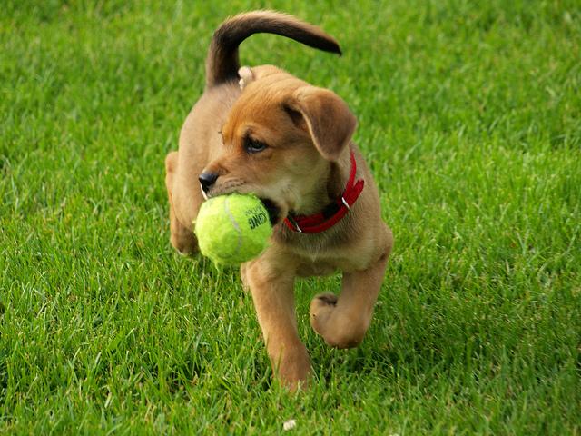 Cães adoram brincar. (Foto: Reprodução / The I Love Dogs)