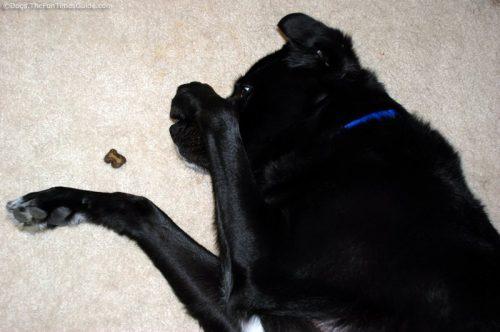 Todo cão pode aprender truques. (Foto: Reprodução / Dogs, the fun times guide)