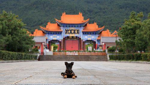 Cientistas acreditam que os cães foram domesticados na Ásia Central. (Foto: Reprodução / Dog Time)