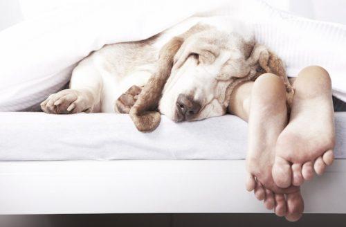 Quem tem um cachorro nunca dorme sozinho. (Foto: Reprodução / Google)