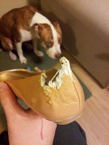 cachorro-flagra-bagunca (12)