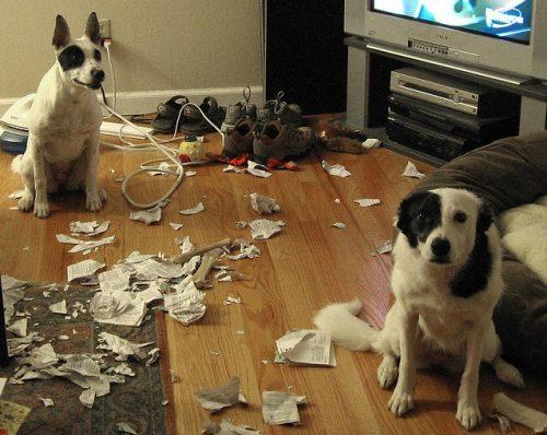 cachorro-flagra-bagunca (6)