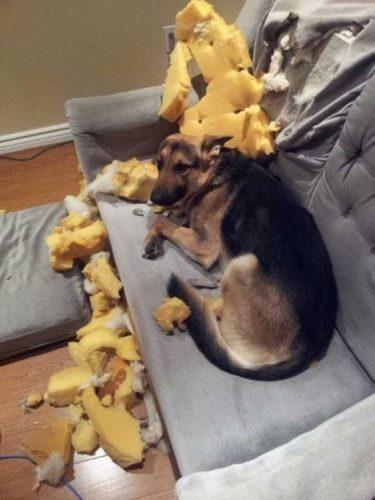 cachorro-flagra-bagunca (9)