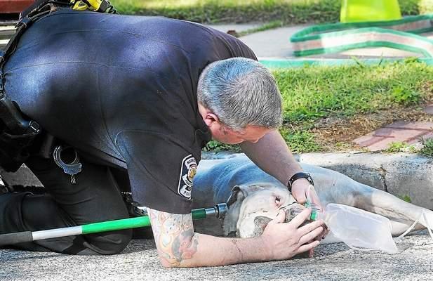 Bombeiro colocando máscara de oxigênio no pit bull Dewey. (Foto: Reprodução / Twitter / The Times Herald)