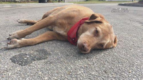 O cachorro Paco ficou no local do acidente. (Foto: Reprodução / Action News Jacksonville)