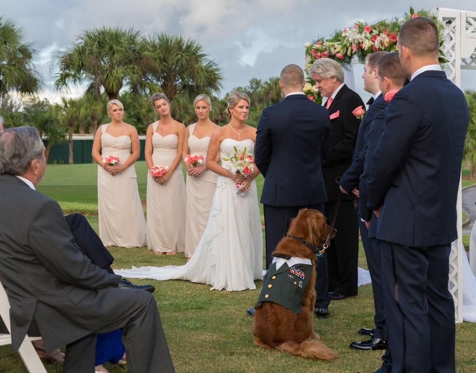 O golden retriever se comportou como um cavalheiro durante a cerimônia. (Foto: Reprodução / The Dodo)