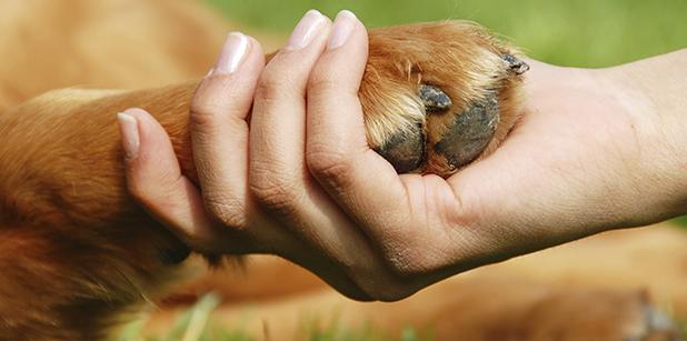 Um cachorro é uma vida. (Foto Ilustrativa: Reprodução / Google)