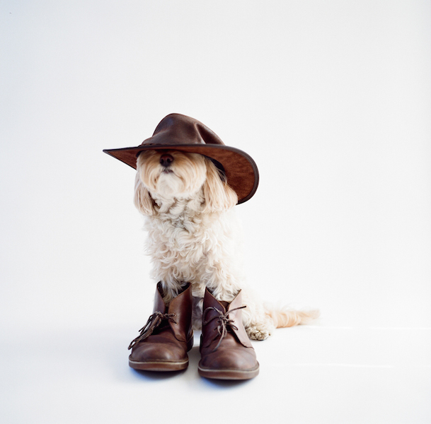 Foto: The McCartney's Dog Photography