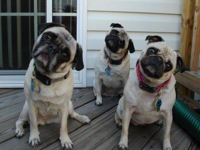 Quer algo mais encantador do que cães inclinando a cabeça? (Foto: Reprodução /