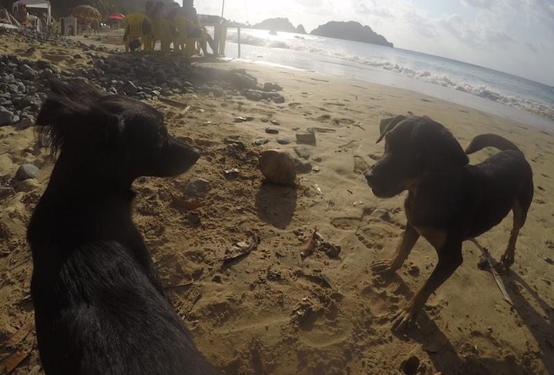 A cachorra Frida (esquerda) e outro cão (direita) curtindo a praia. (Foto: Fabricio Ladeira)