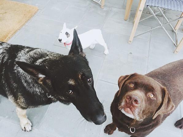 Nash (lado esquerdo), Hank (do lado direito) e LouAnn (atrás). (Foto: Reprodução / Instagram)