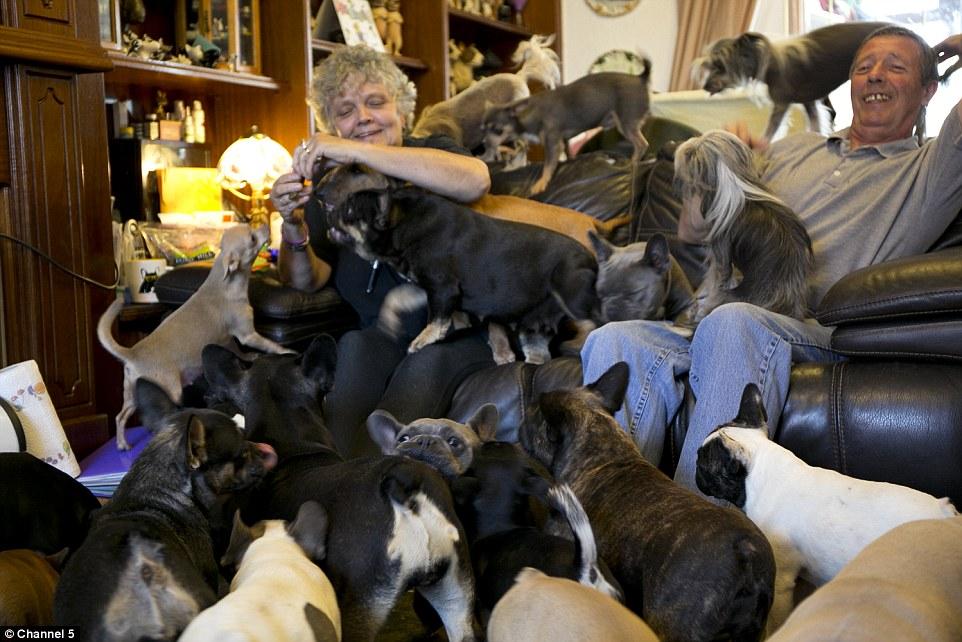 Lynn e Tony vivem com 41 cachorros. (Foto: Reprodução / Daily Mail UK)