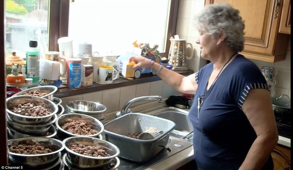 Lynn tem bastante trabalho para preparar as refeições dos cães. (Foto: Reprodução / Daily Mail UK)