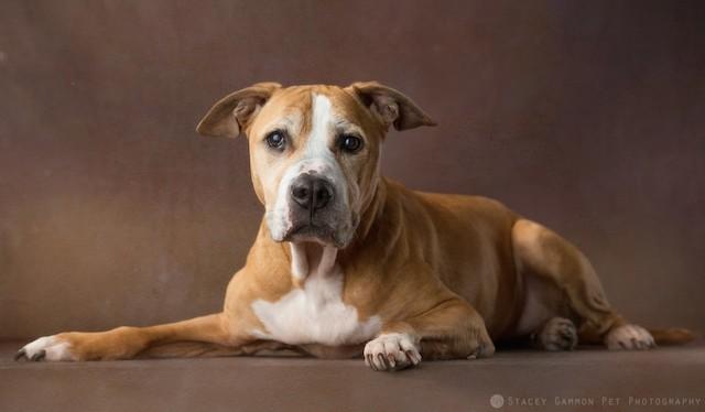 A cachorra Diamond depois de ser resgatada pelo projeto. (Foto: Stacey Gammon)