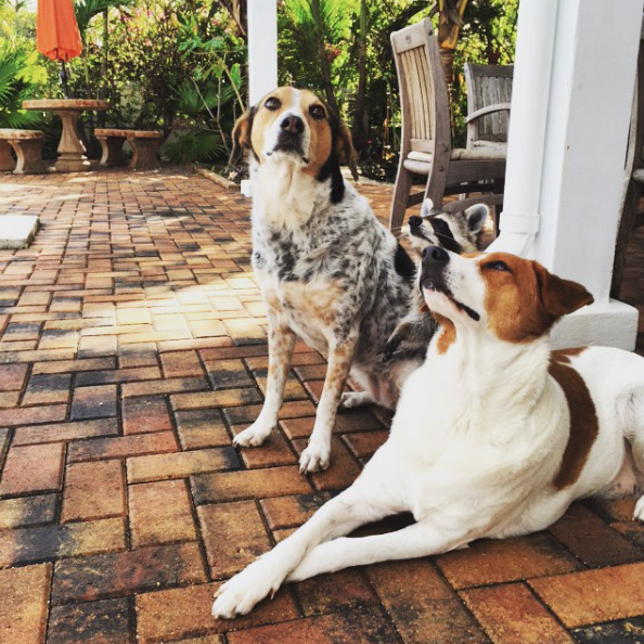 As três irmãs. (Foto: Reprodução / Instagram)