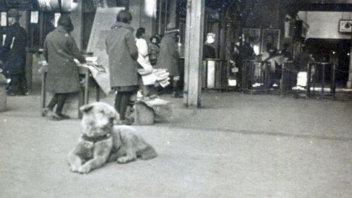 Nova foto divulgada de Hachiko de 1934. Reprodução