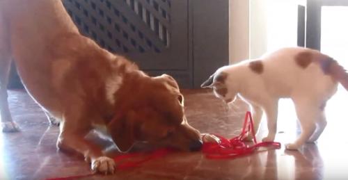 O cão Aragon e a gatinha Simone são grandes amigos. (Foto: Reprodução / Youtube)