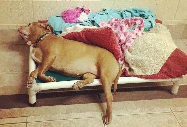 A cachorra Princess parece triste com tanta rejeição. (Foto: Reprodução / Facebook / Princess the Bulldog)