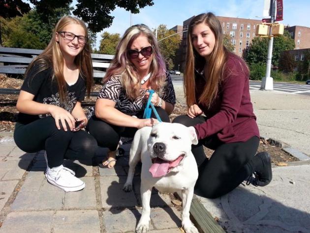 Agora a cachorra Astra tem um lar para chamar de seu. (Foto: Reprodução / Facebook / ONG Red Hook Dog Rescue)