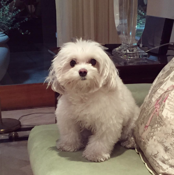 Mion costuma chamar seu cão de Cocadinha. (Foto: Reprodução / Instagram)