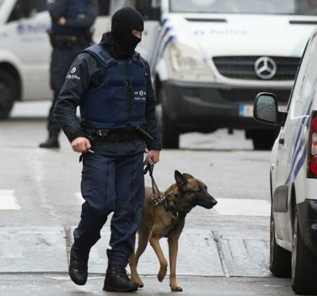 A cachorra policial morreu enquanto trabalhava. (Foto: Reprodução / Bark Post)