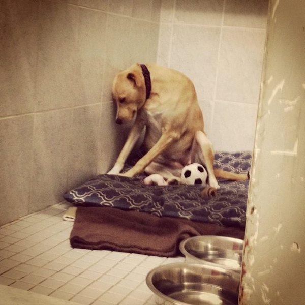 A foto de Lana triste causou comoção. (Foto: Reprodução / Facebook / Mighty Mutts)