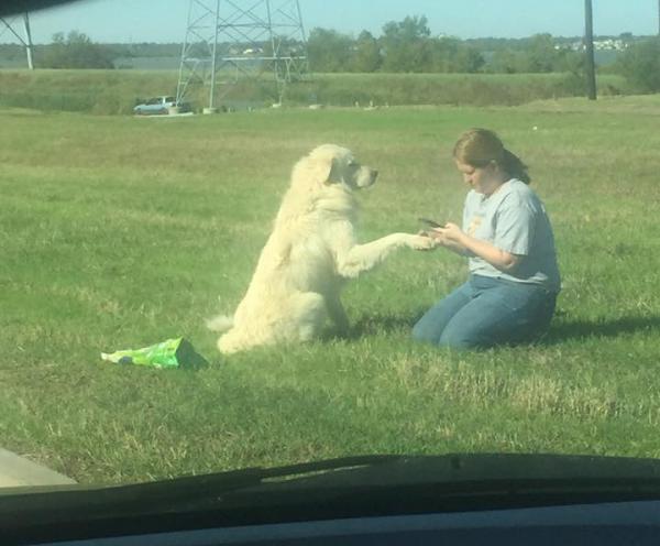 Jessy Faiferlick se aproximando do cão Brian. (Foto: Reprodução / Facebook / Julie Fennell)