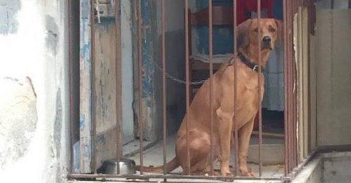Os cães não merecem viver presos. (Foto: Reprodução / The Dodo)