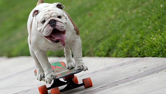 O cão Otto adora andar de skate. (Foto: Reprodução / Guinness World Records)