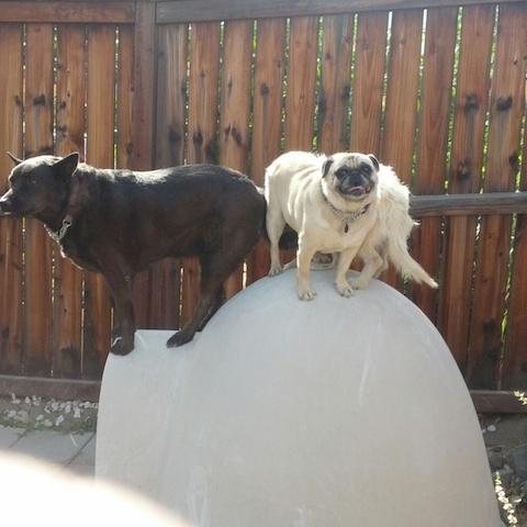 cachorros-fora-casinha-01