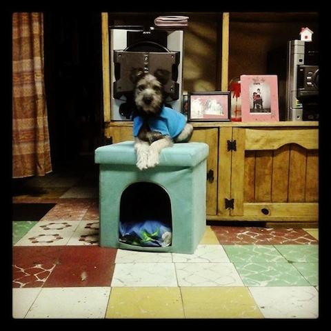 cachorros-fora-casinha-08