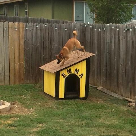 cachorros-fora-casinha-09