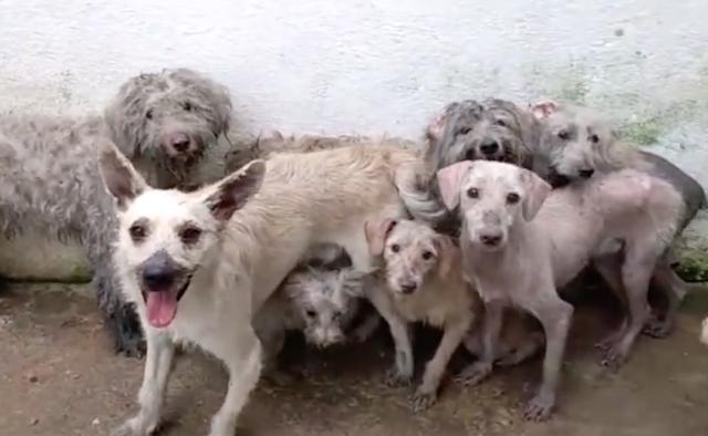 Alguns dos cães que sobreviveram ao incêndio  estão sob os cuidados da ONG Cão Sem Dono. (Foto: Reprodução / Facebook / Cão Sem Dono)