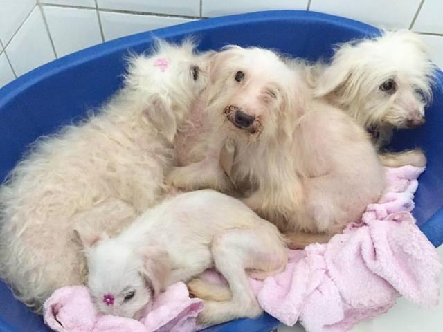 Esses cães estão na ONG Desabandone. (Foto: Reprodução / Facebook / Desabandone)