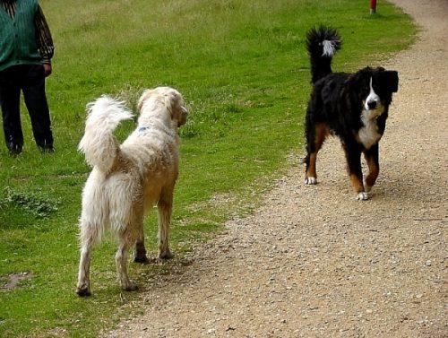 Os cães se comunicam através da linguagem corporal. (Foto: Reprodução / Bark Post)