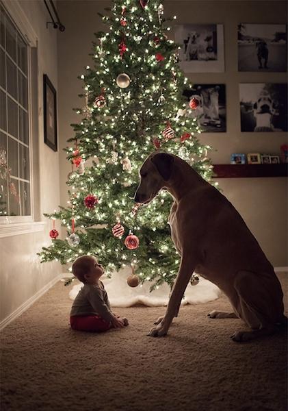 cartao-natal-cachorro-10