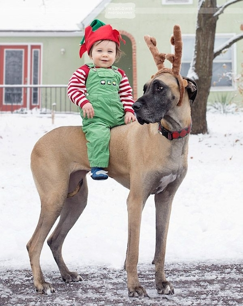 cartao-natal-cachorro-11