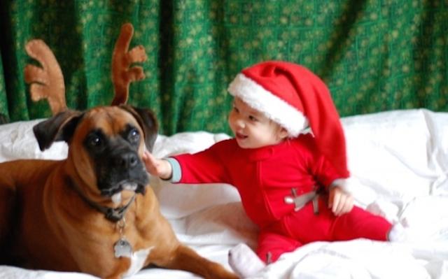 cartao-natal-cachorro-14