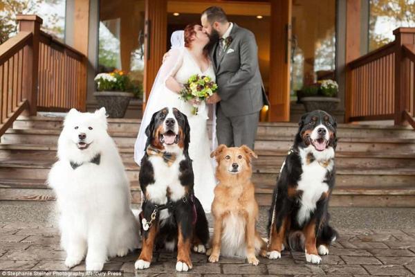 Os cães Zero, Holden, Navi e Arbor participaram do casamento de seus tutores Shandess e Jason Griffin. (Foto: Reprodução / Daily Mail UK)