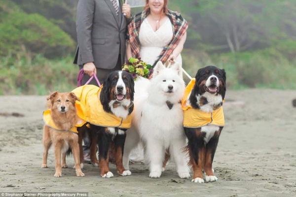 Os cães chamaram mais atenção do que os noivos. (Foto: Reprodução / Daily Mail UK)