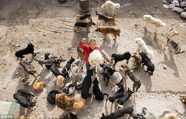 Wan Yan cuida de muitos cães em seu abrigo. (Foto: Reprodução / Daily Mail UK)