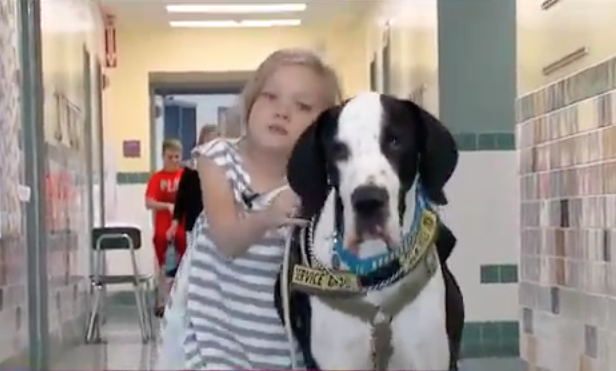 A garota consegue se locomover com a ajuda do cão. (Foto: Reprodução / Youtube / news)