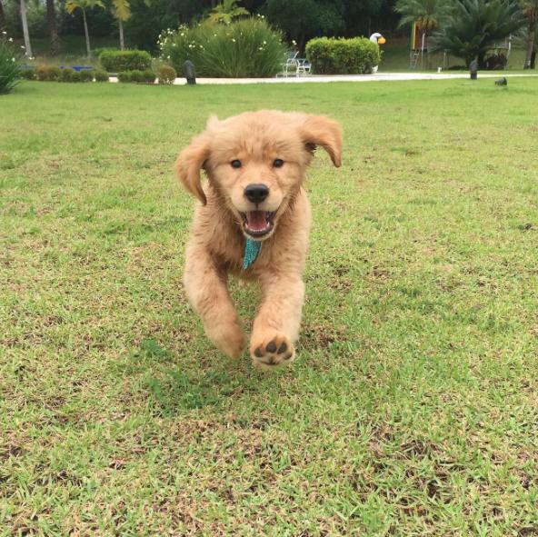 Mion está apaixonado pela cachorrinha. (Foto: Reprodução / Instagram)
