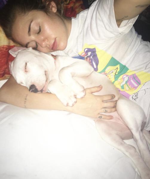 Dormindo com a pit bull. (Foto: Reprodução / Instagram)