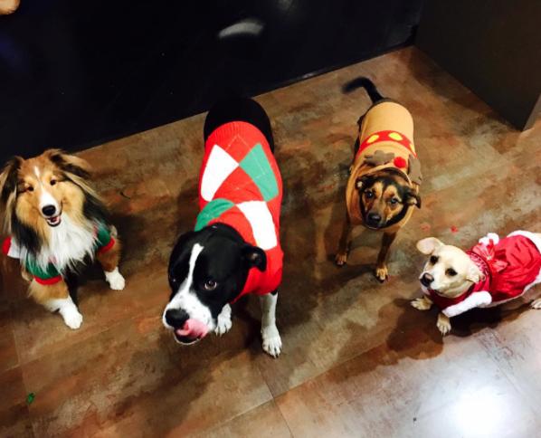 Os cães de Miley já estão prontos para o natal! (Da esquerda pra direita) Emu, Mary Jane, Happy e Bean. (Foto: Reprodução / Instagram)